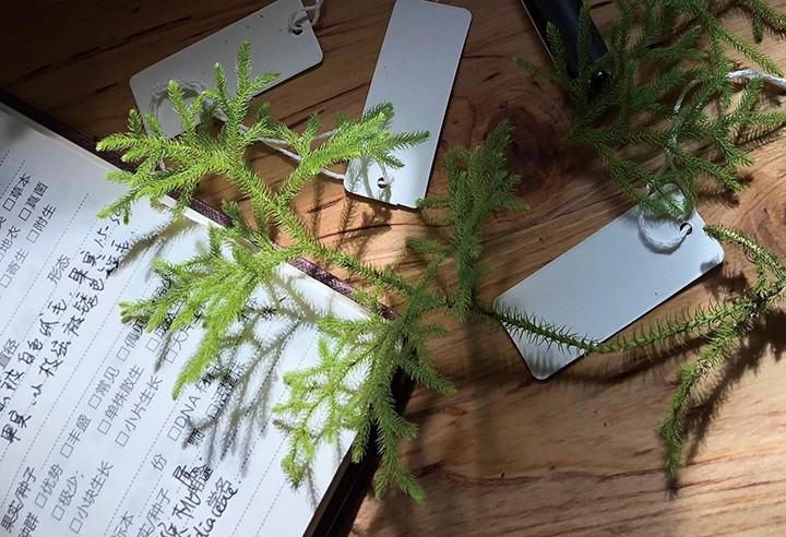 与植物共舞