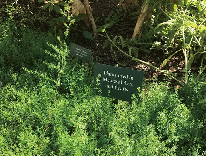 有毒植物在哪里